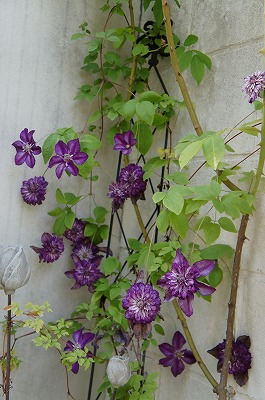 の庭モネ 015.jpg