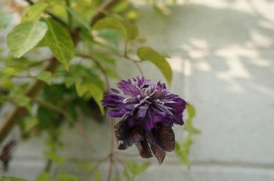 の庭モネ 022.jpg