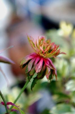 バラ冬の 072.jpg