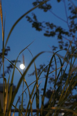 月見 011.jpg