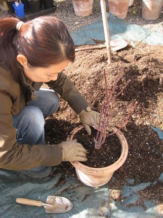 image/gardenerscafe-2-2009-02-24T04:21:03-1.JPG