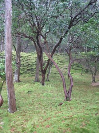 京都2010 037.jpg